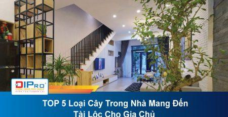 TOP-5-Loai-Cay-Trong-Nha-Mang-Den-Tai-Loc-Cho-Gia-Chu